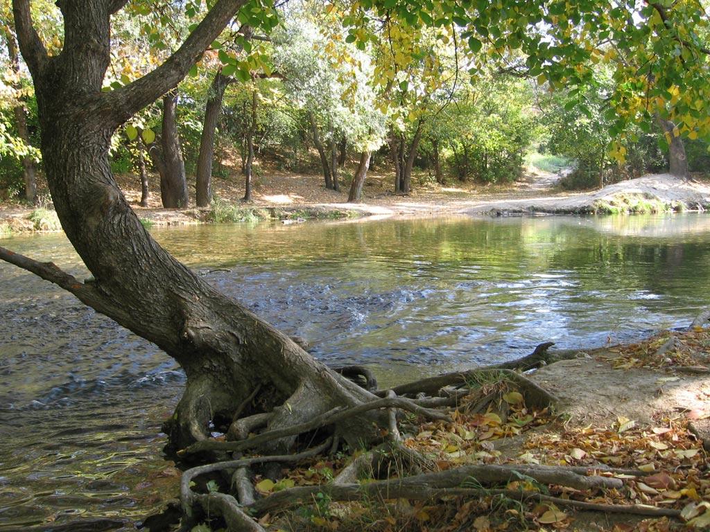 Снять коттедж на берегу озера, реки или водоема